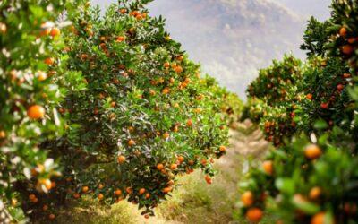 Maquinaria de limpieza para la industria hortofrutícola